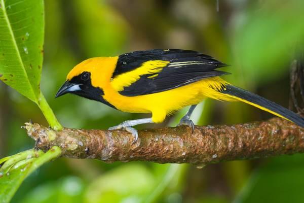 hidden-valleya-birdwatcher-s-paradise.jpg