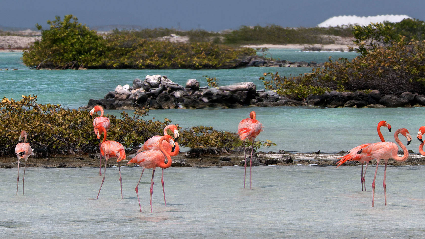 Bonaire1.jpg