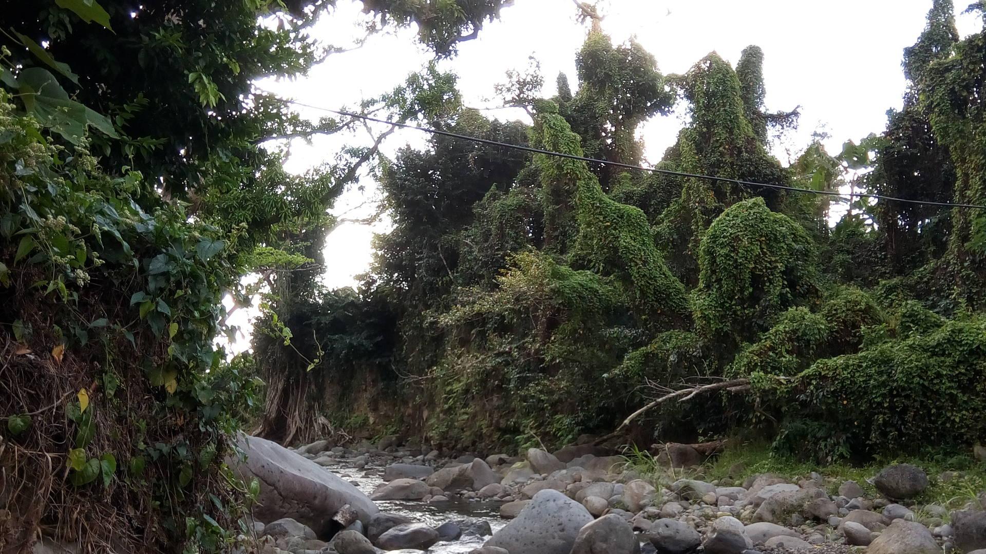 Citrus Creek - Dominica