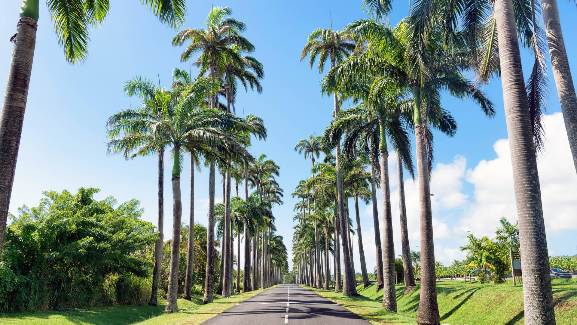 Basse-Terre Guadeloupe