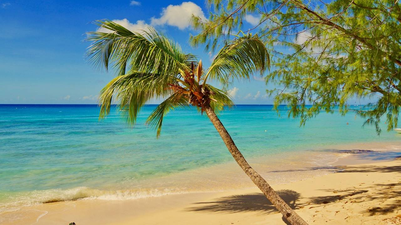 Jullie reis naar de Caribbean | Covid-19